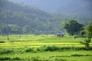 Tungkongmu-field2